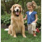 Láthatatlan kerítés kutyakerítés Petsafe BASIC