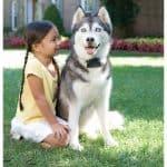 Láthatatlan kerítés kutyakerítés Petsafe super