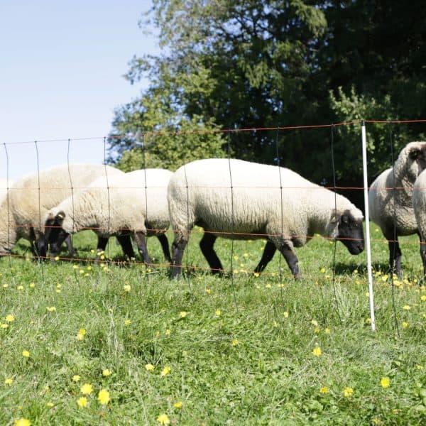 Villanypásztor Háló Bárányok számára,magassága 90 cm, 50 m hosszúságú,14 pózna dupla leszúróval